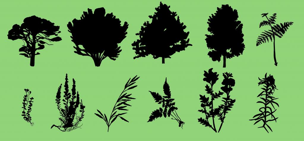 Plants found as pollen