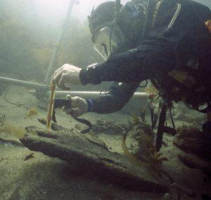 Contour survey of the Duart Point site Copyright: Historic Environment Scotland