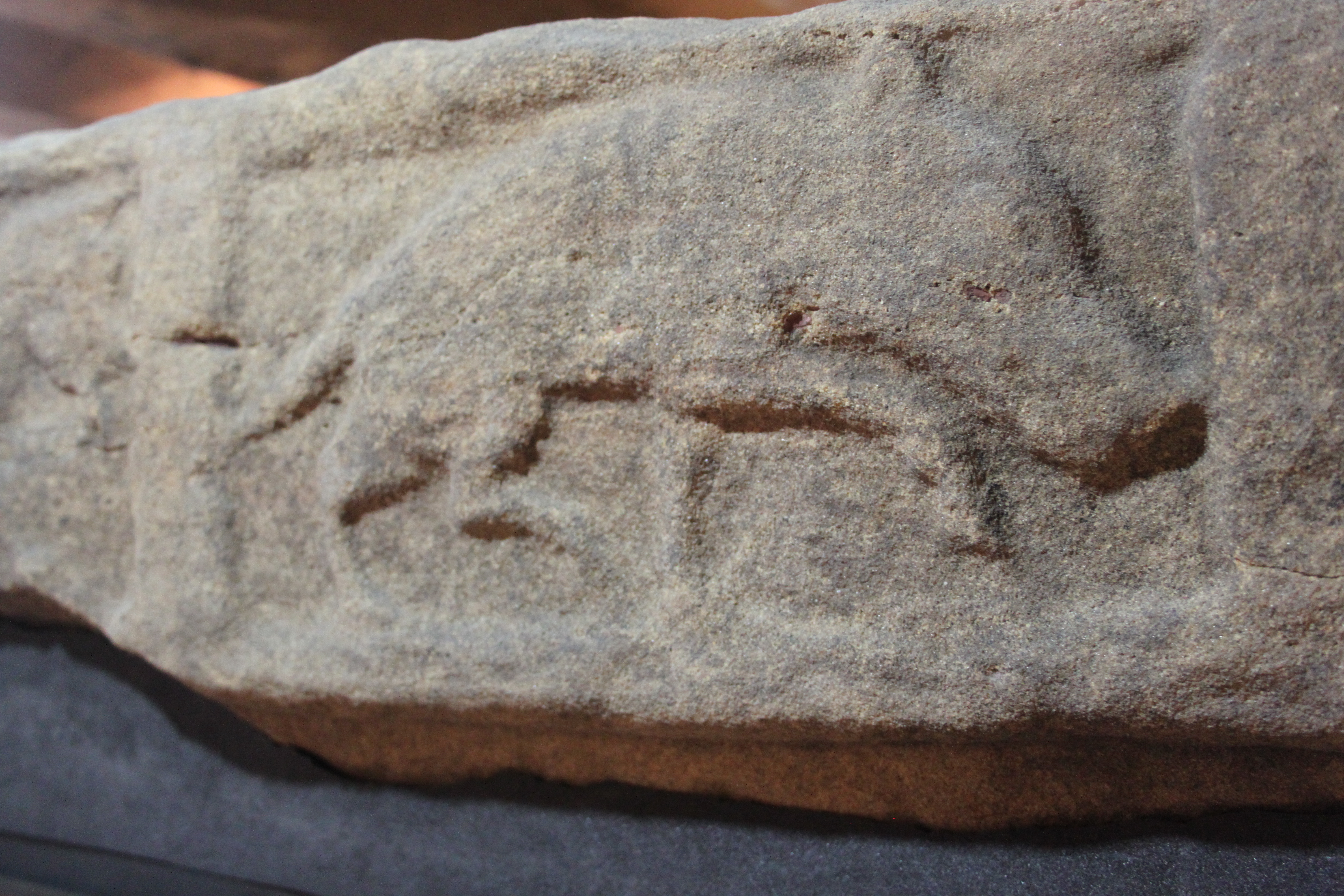 wild boar carved in relief on a sarcophagus lid