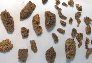 Sperm whale bone from Cladh Hallan