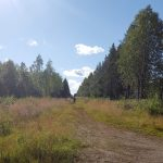 Photograph of walking the route of the old Arctic Highway outside Rovaniemi